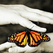 The Hands And The Butterfly Art Print