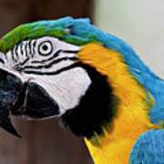 The Happy Macaw Art Print