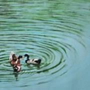 The Herd Series - Duck Meet Art Print