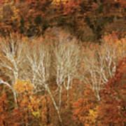 The Hills In Autumn Art Print