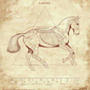 The Horse's Canter Revealed Art Print