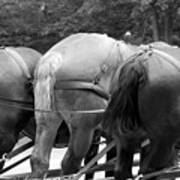 The Horses Of Mackinac Island Michigan 03 Bw Art Print