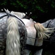 The Horses Of Mackinac Island Michigan 04 Art Print