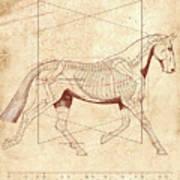 The Horse's Trot Revealed Art Print