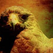 The Hunter . Portrait Of A Hawk . Texture . 40d7877 Art Print
