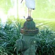 The Hydrant Bird Art Print