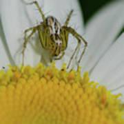 The Itsy Bitsy Spider Art Print