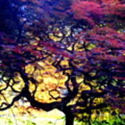 The Japanese Maple Art Print
