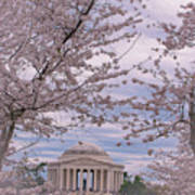 The Jefferson Memorial Attracts Large Crowds At The Cherry Blossom Festival Art Print