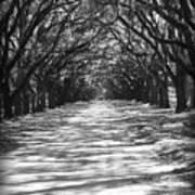 Live Oaks Lane With Shadows - Black And White Art Print