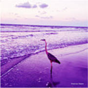 The Joy Of Ocean And Bird 2 Art Print