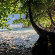 The Jungle At Onomea Bay  Art Print