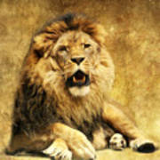 The King Print by Angela Doelling AD DESIGN Photo and PhotoArt
