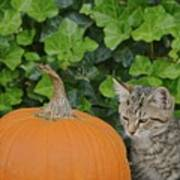 The Kitten And The Pumpkin Art Print