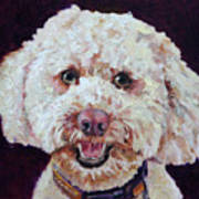 The Labradoodle Art Print