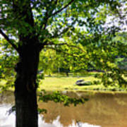 The Lake In The Park Art Print
