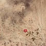 The Last Blossom Art Print