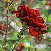 The Last Rose Of Summer Art Print