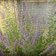 The Lavender Outside Her Window Art Print