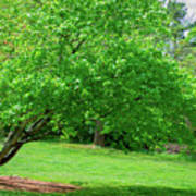 The Leaning Tree Art Print