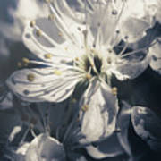 The Light Of Spring Petals Art Print