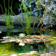 The Lily Pond II Art Print