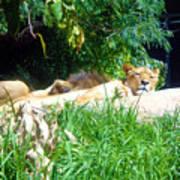 The Lion Awakes Art Print