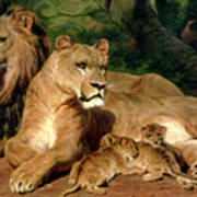 The Lions At Home Art Print