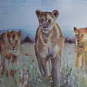 The Lions Of Africa 1 Art Print