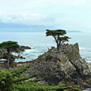 The Lone Cypress Stands Alone Art Print