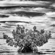 The Lone Mangrove Art Print