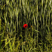 The Loneliness Of A Poppy Art Print