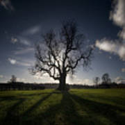 The Lonely Tree Art Print by Angel  Tarantella