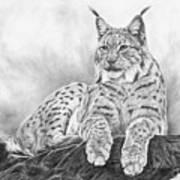 The Lynx 2017 Version Art Print