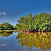 The Mangrove Coast Art Print