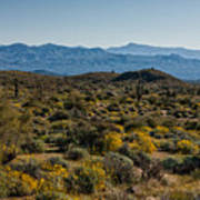 The Mcdowell Mountains Art Print
