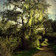 The Mighty Oaks Of Garland Ranch Park 2 Art Print