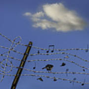 The Musical Barbed Wire Birds Art Print