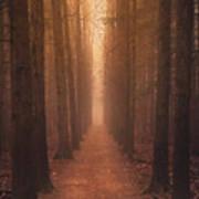 The Narrow Path Art Print