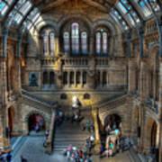 The Natural History Museum London Uk Art Print