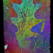 The Oak Leaf Art Print