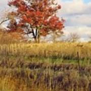 Red Oak Under November Skies Art Print