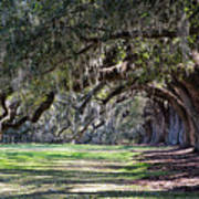 The Oaks At Boone Hall Art Print