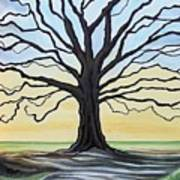 The Stained Old Oak Tree Art Print