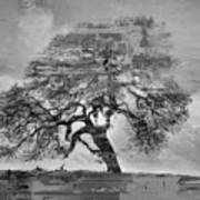 The Old Oak Tree Standing Alone  Art Print