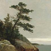 The Old Pine, Darien, Connecticut, 1872  Art Print