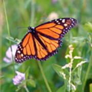 The Orange Butterfly Art Print