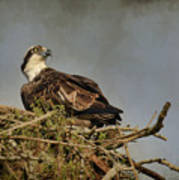 The Osprey Nest Art Print