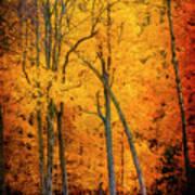 The Path To Autumn Art Print