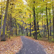 The Pathway To Fall Art Print